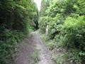 森林全裸散歩 お尻プルプルダッシュ付き